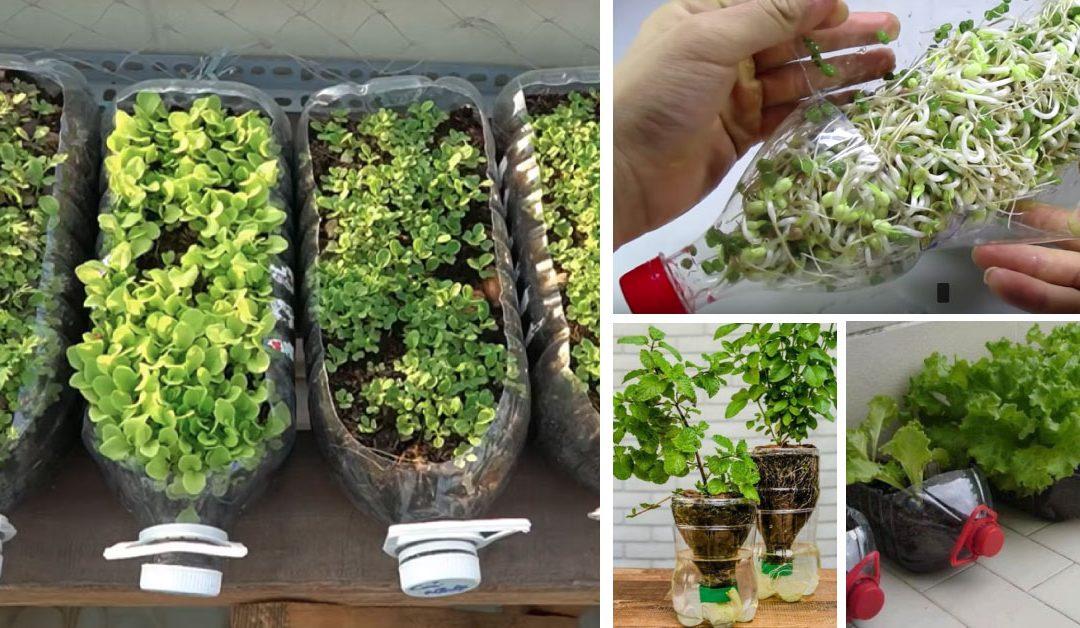 วิธีปลูกผักในขวดน้ำพลาสติก ง่าย ประหยัด ใช้พื้นที่น้อย